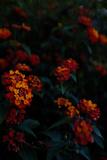 Springing Photo by Sebastian Black