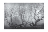 Owl'S Head Park Trees Fog Photographic Print by Henri Silberman