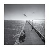Berkeley Pier Birds Photographic Print by Henri Silberman