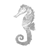 Silver Seahorse Square II Poster by Julie DeRice