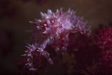 A Soft Coral Crab Blends into its Host Coral Colony Photographic Print by  Stocktrek Images