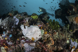 A Giant Frogfish Blends into its Reef Surroundings in Indonesia Photographic Print by  Stocktrek Images