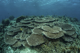 The Seafloor Is Covered by Reef-Building Corals in Indonesia Photographic Print by  Stocktrek Images