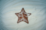 A West Indian Starfish on the Seafloor in Turneffe Atoll, Belize Photographic Print by  Stocktrek Images