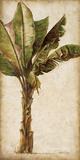 Patricia Pinto - Tropic Banana I Umělecké plakáty