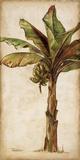 Patricia Pinto - Tropic Banana II Obrazy
