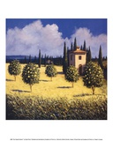 Sun Kissed Orchard I Print by David Short
