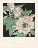Camellia Limited Edition by Sudi Mccollum