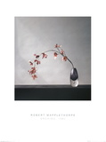 Orchids (1982) Prints by Robert Mapplethorpe
