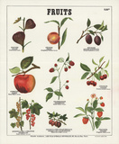 Fruits I Collectable Print by  Deyrolle