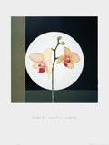 Orchids (1988) Poster by Robert Mapplethorpe