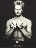 Sting (Gordon Sumner) Collectable Print by Terry O'Neil