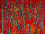 Scarlet Mascarade Limited Edition Print on Canvas by Ford Smith