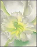 An Orchid, 1941 Mounted Print by Georgia O'Keeffe