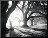 Oak Alley, Light and Shadows Montert trykk av William Guion