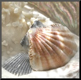 Coral Shell III Mounted Print by Donna Geissler
