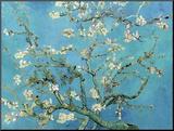 Ramas de almendros en flor, Saint Rémy, c.1890 Lámina montada en tabla por Vincent van Gogh