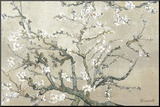 Almond Branches in Bloom, San Remy, c.1890 (tan) Mounted Print by Vincent van Gogh