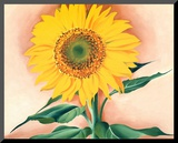 A Sunflower from Maggie, 1937 Mounted Print by Georgia O'Keeffe