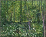 Trees and Undergrowth, c.1887 Lámina montada en tabla por Vincent van Gogh