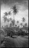 Coconut Grove, Lahaina, 1910 Mounted Print by Ray Jerome Baker
