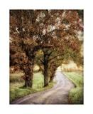 Walk Me Home Limitierte Auflage von Burt D.