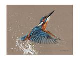 Martin-pêcheur Affiche par Sarah Stribbling