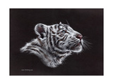 White Tiger Pastel Art by Sarah Stribbling