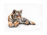 Tiger Cub Colour Pencil Drawing Poster di Sarah Stribbling