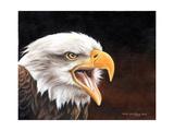 Aquila bianca Arte di Sarah Stribbling