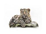 Cucciolo di leopardo Stampe di Sarah Stribbling