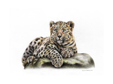 Leopard Cub Prints by Sarah Stribbling