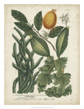 Exotic Weinmann Botanical III Giclee Print by  Weinmann