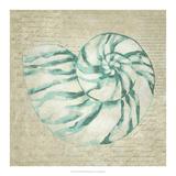Seafoam Shell I Posters by Chariklia Zarris