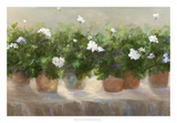 White Geraniums Prints by Sheila Finch