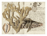 Sealife Journal II Giclee Print by  Vision Studio