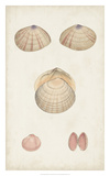 Antiquarian Shell Study V Giclee Print by  Vision Studio