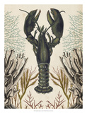 Antiquarian Menagerie - Lobster Giclee Print by Naomi McCavitt