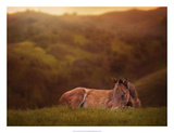 Foal in the Field I Prints by Ozana Sturgeon