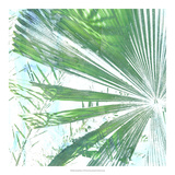 Emerald Palms I Prints by Pam Ilosky