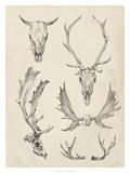 Skull & Antler Study II Giclee Print by Ethan Harper