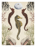 Antiquarian Menagerie - Seahorse Giclee Print by Naomi McCavitt