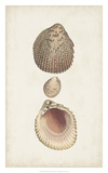 Antiquarian Shell Study VI Giclee Print by  Vision Studio