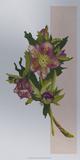 Flower Repose I Art by Dianne Miller