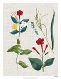 Floral Assemblage III Giclée-Druck von  Vision Studio