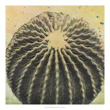 Desert Dreams III Giclee Print by Naomi McCavitt
