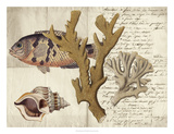 Sealife Journal I Giclee Print by  Vision Studio