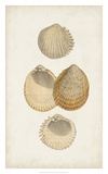 Antiquarian Shell Study II Giclee Print by  Vision Studio
