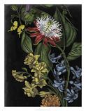 Dark Floral III Giclee Print by Naomi McCavitt