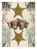 Antiquarian Menagerie - Starfish Giclee Print by Naomi McCavitt
